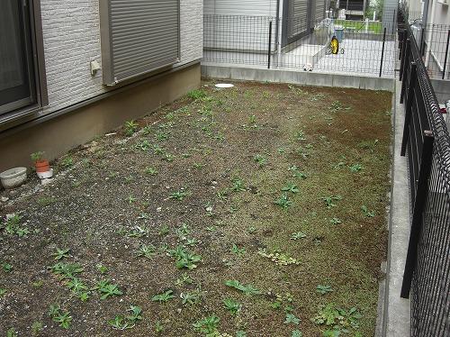 手付かずのお庭。